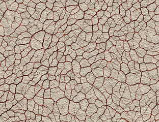 dry cracked wilderness ground texture