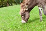 donkey eats grass