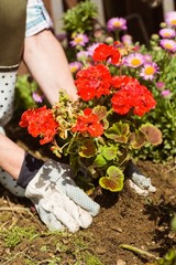 Woman planting a red flower