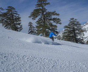 skier powder trees