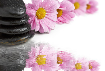 spa Background - black stones and camomiles on water