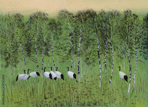 Fototapeta Cranes in the swamp