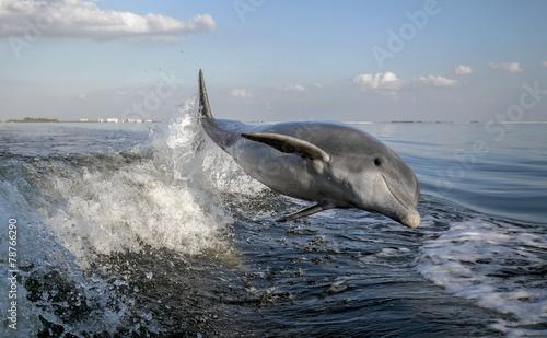 Deurstickers Dolfijn Bottle Nosed Dolphin