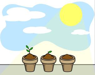 Plants and Sun Light
