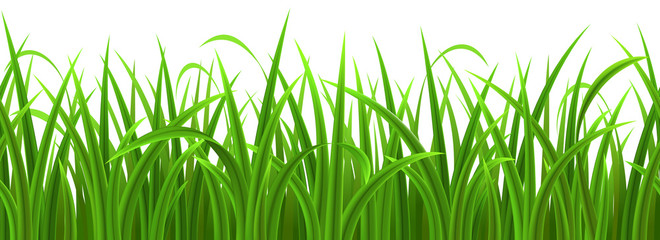 Seamless green grass isolated on white, vector illustration