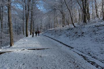 bosco d'inverno - monte Generoso