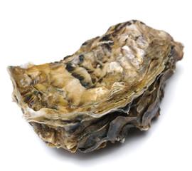 Geschlossene Auster