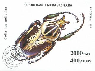wild bug