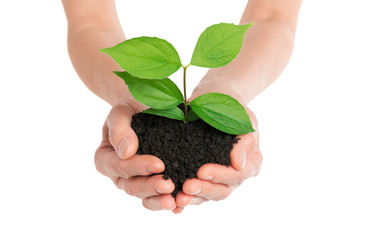 Hands holding green plant new life concept