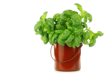 fresh parsley in an enamel cooking pot on a white background