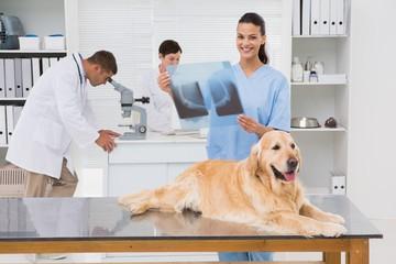 Veterinarian coworker examining dogs x-ray