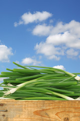 green onions in a wooden crate against a blue sky with clouds
