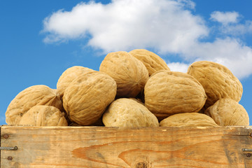 walnuts in a wooden crate against a blue sky with clouds