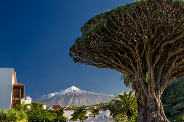 Drachenbaum und Teide auf Teneriffa