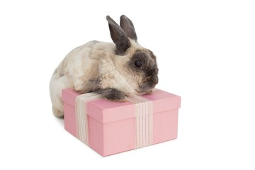 Fluffy bunny with pink gift box