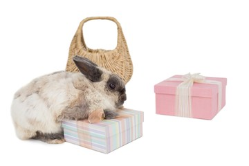 Fluffy bunny with gift boxes and wicker basket