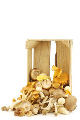 mixed freshly harvested mushrooms in a wooden crate