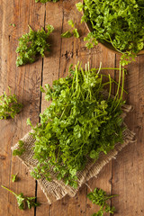 Raw Organic French Parsley Chervil