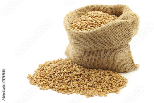 farro grain in a burlap bag with an aluminum scoop on a white ba - 78789838