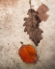 Textur Herbstblätter