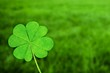 Composite image of four leaf clover - 78793410
