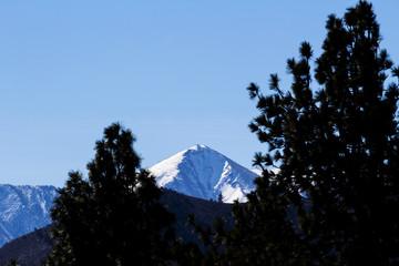 Distant Snow Covered Peak Through Pine Trees