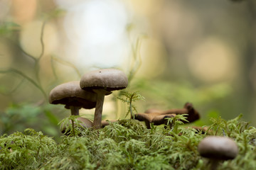 Mushrooms on moss