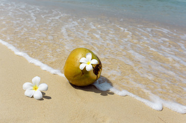 Coconut on the beach.