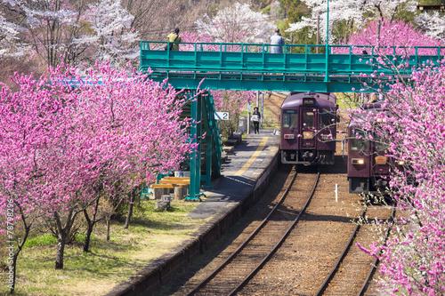 Fotobehang Kersen 春の渡良瀬渓谷鉄道1