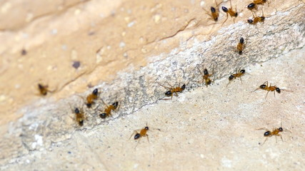 Macro of common sugar ants grouping against side of brick in 4k