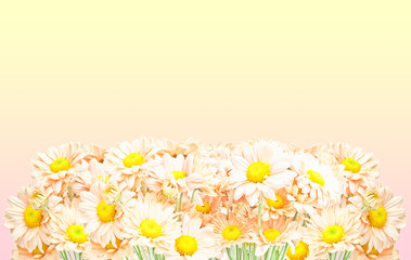 Bouquet of chrysanthemums isolated on white
