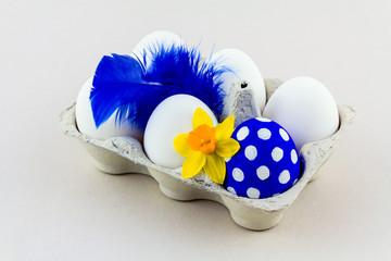 Blaues Osterei mit Feder und Narzisse im Eierkarton