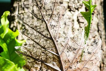 Dry decay brown leaf