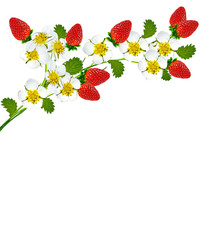 Branch strawberry on a white background