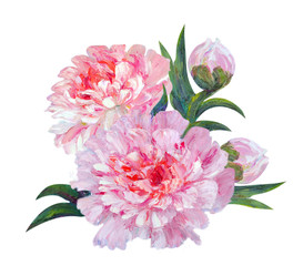 Peony isolated on white, oil painting