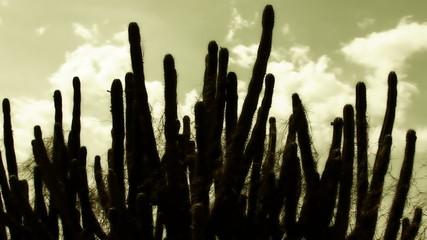 Cactus cloudscape time lapse in Colombia desert, La Guajira