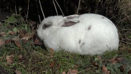 Kaninchen liegt und läuft davon