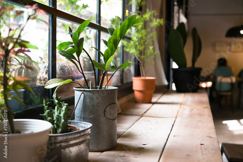 A small plant pot displayed in the window - 78815070