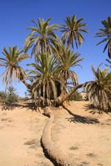 bouquet de palmiers