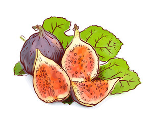 Figs. Watercolor imitation with sketch.