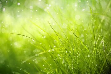 Morning dew on spring grass