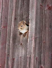 squirrel in hole