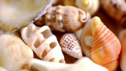 Close up cockleshell, shells and seashells. Macro video shift