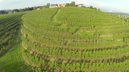 Aerial view of village with wineyards