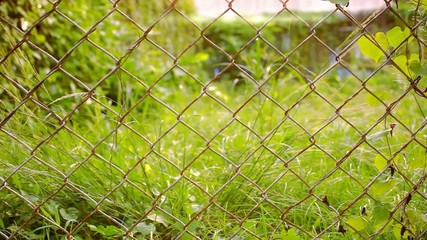 Old metal fence and blurred green grass with flying butterfly