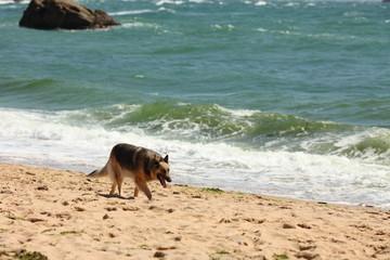 chien errant sur une plage