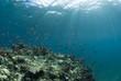 海底に差し込む光と小魚の群れ