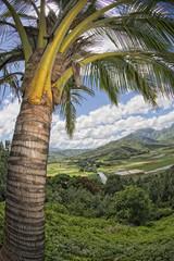 hawaii kauai fields aerial view
