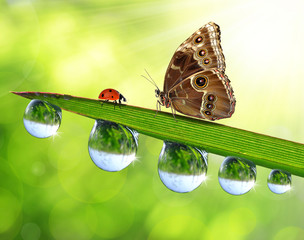 Fresh green grass with dew drops, butterfly and ladybird