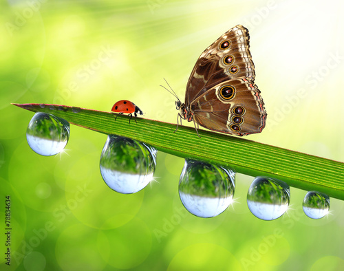 Papiers peints Papillon Fresh green grass with dew drops, butterfly and ladybird